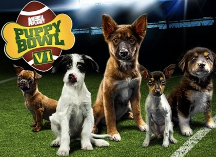The 2013 Puppy Bowl Power Rankings